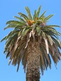 Http-_www.publicdomainpictures.net_view-image.php?image=236&picture=palm-tree      IMG_0791