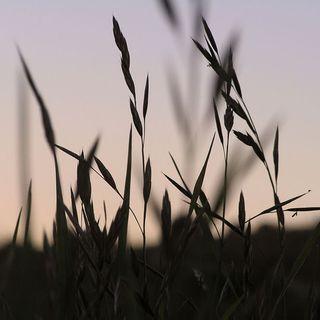 Http-_www.publicdomainpictures.net_view-image.php?image=16737&picture=grass-silhouette -grass-silhouette