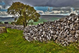 http-_www.publicdomainpictures.net_view-image.php?image=9093&picture=tree-and-stone-wall -tree-and-stone-wall-11284391110PdDv